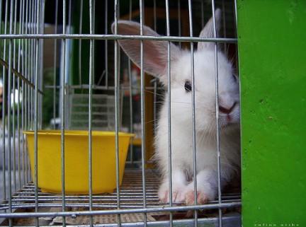 Ecologiablog_conejo.jpg