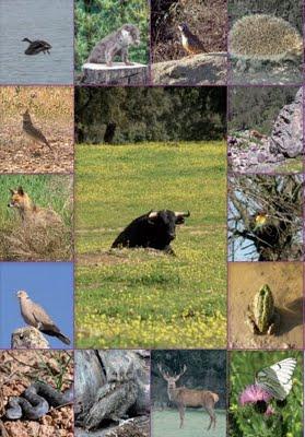 Toros y Biodiversidad.jpg
