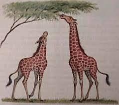 evoluc.jpg