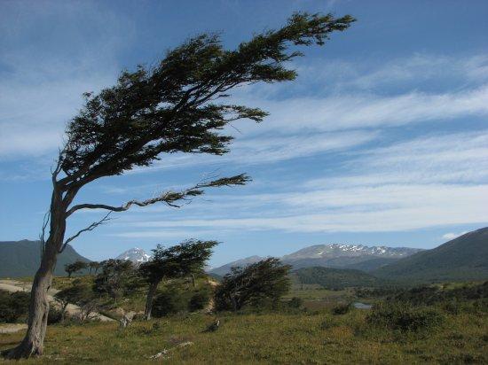 viento.jpg